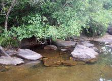 Природный биотоп. Остров Фукок, Вьетнам. Фото Вячеслава Вериги