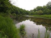 Река Арсеньевка, биотоп горчака. Фото Вячеслава Вериги