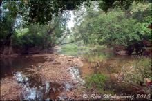 Биотоп обитания вида. Photo by Beta Mahatvaraj. Печатается с разрешения автора
