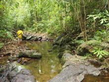 Природный биотоп. Южный Таиланд. Фото Вячеслава Вериги