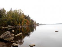 Биотоп обитания. Финский залив. Фото Алексея Малышева