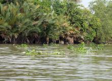 Биотоп обитания. Меконг. Фото Вячеслава Вериги