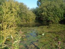 Природный биотоп карася (Ленинградская область). Фото Алексея Малышева