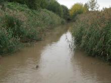 Природный биотоп обитания. Река Красненькая, Ленинградская область.