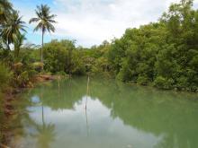 Биотоп обитания вида. Таиланд. Мангровое болото. Фото Вячеслава Вериги