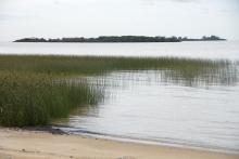 Биотоп обитания вида. Река Уругвай. Photo by Mark Sabaj Perez