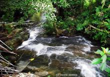 биотоп обитания вида. Photo by Ton Eakapan. Печатается с разрешения авора
