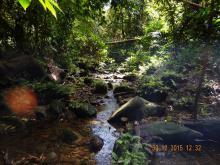 Биотоп обитания вида. Photo by Praveen Raj Jayasimhan. Печатается с разрешения автора