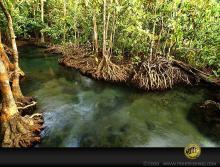 Биотоп обитания вида (Таиланд). Foto by Ton Eakapan. Печатается с разрешения автора