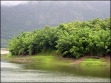 Биотоп обитания вида. Photo by Beta Mahatvaraj