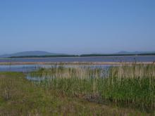 Озеро Ханка. Фото Вячеслава Вериги
