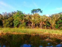 Биотоп обитания вида. Photo by Junior Alberto. Печатается с разрешения автора